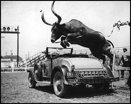 bull jumping over car