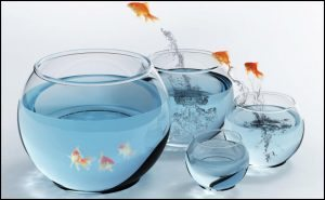 fish-jumping-out-of-bowl-leadership-pic