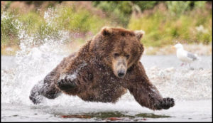 picture of a bear for Chris kimble post