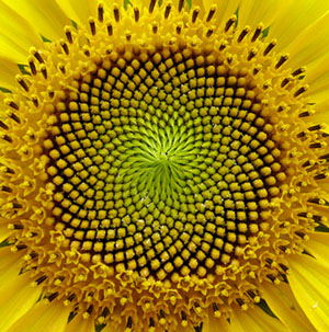 The Power of the Pattern --Sunflower